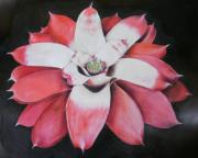 Neoregelia Painting Framed Prints - Neoregelia Madam President Framed Print by Penrith Goff