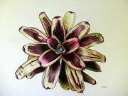 Epiphyte Metal Prints - Neoregelia Painted Delight Metal Print by Penrith Goff