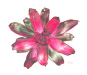 Epiphyte Metal Prints - Neoregelia Puppy Love Metal Print by Penrith Goff