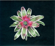 Epiphyte Painting Prints - Neoregelia Terry Bert Print by Penrith Goff