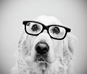 Looking At Camera Art - Nerd Dog by Thomas Hole