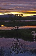 Roger Lewis Metal Prints - Nerepis Marsh Sunset Metal Print by Roger Lewis