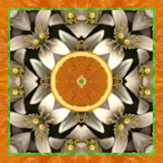 Sacred Geometry Posters - Neroli Poster by Bell And Todd