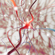 Neuron Prints - Nerve Cell Print by Mehau Kulyk