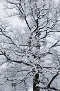 Wintry Photo Posters - Nerves Poster by Gabriela Insuratelu