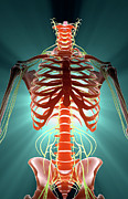 Nerves Print by MedicalRF.com
