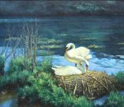 Swans... Paintings - Nesting Swans by Robert Tutsky