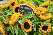 Amsterdam Market Posters - Netherlands Sunflowers Poster by Joan Carroll