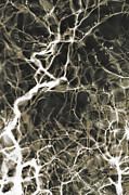 Neurosurgeon Posters - Neurons Firing Poster by Christopher Kulfan