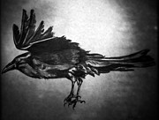 Edgar Drawings - Nevermore. by Kim Chigi