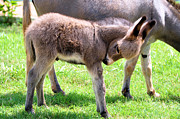Donkeys Art - New Arrival by Jan Amiss Photography