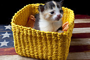 Baskets Posters - New born kitten Poster by Garry Gay