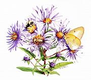Asters Prints - New England Asters Print by Betsy Gray