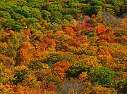 Vivid Fall Colors Art - New England Fall Foliage Peak  by Juergen Roth