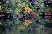 New England Fall Reflection Print by Carol Groenen