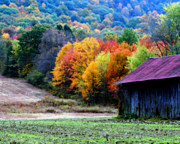 Fall Scenes Digital Art Posters - New England Tobacco Barn In Autumn Poster by Smilin Eyes  Treasures