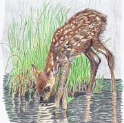 Tony  Nelson - New Fawn Takes a Drink...