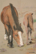 Pony Drawings Originals - New Forest Mare and Foal by Jan Lowe