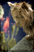 Goldfish Digital Art Prints - New Friends Print by Chris Lord