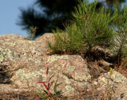 South Dakota Tourism Photos - New growth by Mike Oistad