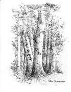Jim Hubbard - New Hampshire-White Birch