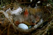 Baby Bird Photos - New Life by Snow White
