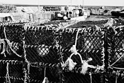 Lobster Pots Prints - new lobster pots piled up at John OGroats harbour scotland uk Print by Joe Fox
