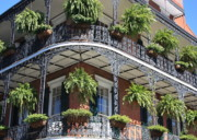 Hanging Baskets Framed Prints - New Orleans Balcony Framed Print by Carol Groenen