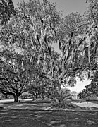 White City Park Framed Prints - New Orleans City Park monochrome  Framed Print by Steve Harrington