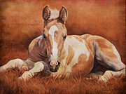 Foal Framed Prints - New Paint Framed Print by JQ Licensing