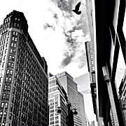 Cities Art - New York City - In Flight by Vivienne Gucwa
