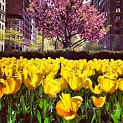 Landscapes Posters - New York City in the Spring Poster by Vivienne Gucwa