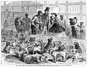 Humane Framed Prints - New York: Dog Pound, 1866 Framed Print by Granger