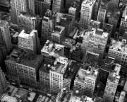 Nyc Rooftop Prints - New York Rooftops Print by William  Todd