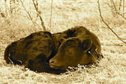 Newborn - Sepia Print by Pamela Walrath