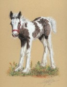 Rural Pastels Framed Prints - Newborn Foal Framed Print by Terry Kirkland Cook