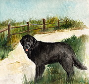 Split Rail Fence Painting Prints - Newfie  Print by Nancy Patterson