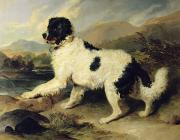 Fur Coat Prints - Newfoundland Dog Called Lion Print by Sir Edwin Landseer