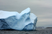 Icebergs Photos - Newfoundland Icebergs by Charline Xia