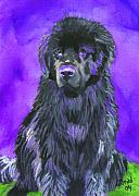 Newfoundland Art Paintings - Newfoundland Watercolor by Mary Jo  Zorad