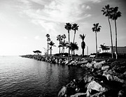Black And White Framed Prints - Newport Beach Jetty Framed Print by Paul Velgos