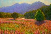 Terry Perham Originals - Newyear Lupins Egglinton Valley by Terry Perham