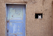 Taos Prints - Next To A Blue Door, A Cat Peers Print by Ira Block