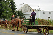 Amish Farms Framed Prints - Next Wagons Ready Framed Print by Joyce Huhra