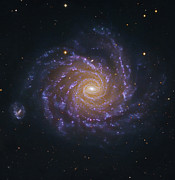 Cosmic Dust Posters - Ngc 1232, A Spiral Galaxy In Eridanus Poster by Robert Gendler