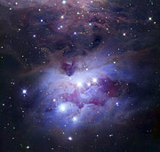 Reflection Nebula Posters - Ngc 1977 Is A Reflection Nebula Poster by Robert Gendler