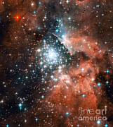 Star Birth Posters - Ngc 3603, Giant Nebula Poster by Nasa