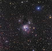 Deep Reflection Posters - Ngc 7129, Reflection Nebula In Cepheus Poster by Don Goldman