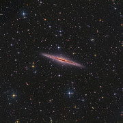 Starfield Posters - Ngc 891 Is An Edge-on Galaxy Poster by Don Goldman