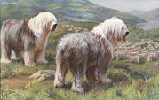 Sheepdogs Art - Ngm194112_786, 9/21/07, by National Geographic